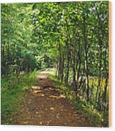 A Path Around The Pond Wood Print