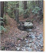A Peaceful Redwood Creek On Mt Tamalpais Wood Print