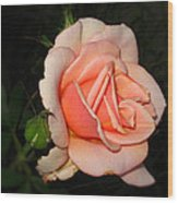 A Peach Of A Rose Wood Print