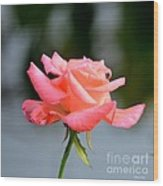 A Peachy Pink Delight Wood Print