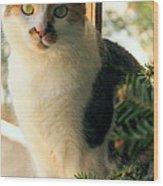 A Pet And Christmas Wood Print