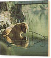 A Pet Dog Sits In The Shallow Water Wood Print