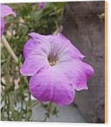 A Photo Of A Purple Trumpet Shaped Flower Wood Print