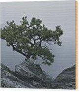 A Pine Tree Clings To A Rocky Ridge Wood Print