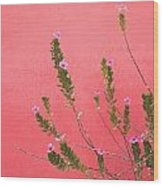 A Pink Flowering Plant Growing Beside A Wood Print by Stuart Westmorland