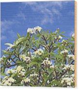 A Plumeria Caracasana Tree In Full Wood Print