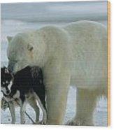 A Polar Bear Ursus Maritimus Snuggles Wood Print