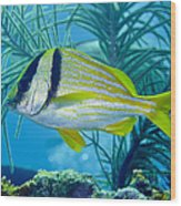 A Porkfish Swims By Sea Plumes Wood Print