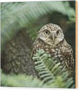 A Portrait Of A Captive Burrowing Owl Wood Print