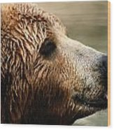 A Portrait Of A Captive Kodiak Brown Wood Print