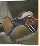 A Portrait Of A Mandarin Duck Wood Print