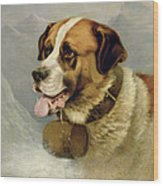 A Portrait Of A St. Bernard Wood Print