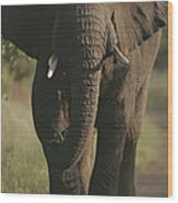 A Portrait Of An African Elephant Wood Print