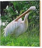 A Preening Stork Wood Print