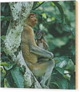 A Proboscis Monkey Wood Print