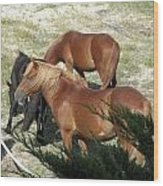 A Proud Stallion With His Mares Wood Print