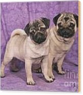 A Pug And A Pug Wood Print