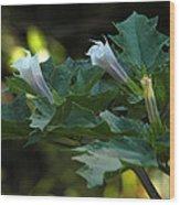 A Purple Couple Wood Print