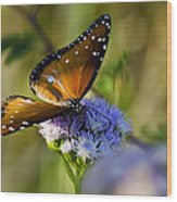 A Queen Butterfly  Wood Print