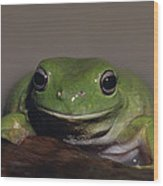 A Queensland Subspecies Of Green Tree Wood Print