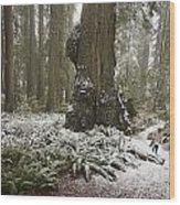 A Rare Snow Dusts The Trail Through Del Wood Print