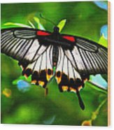 A Real Beauty Butterfly Wood Print