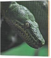 A Real Reptile Wood Print