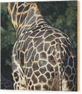 A Rear View Of A Rothschild Giraffe Wood Print