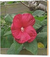 A Red Hibiscus Wood Print