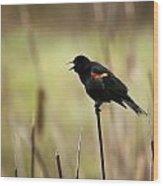 A Red-winged Blackbird Agelaius Wood Print