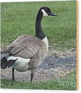 A Regal Goose Wood Print
