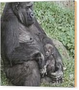 A Relaxed Western Lowland Gorilla Wood Print