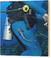 A Remora Attached To A Diver, Kimbe Wood Print