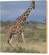 A Reticulated Giraffe On A Samburu Wood Print