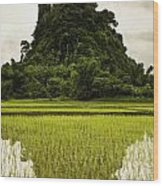 A Rice Field In Asia Wood Print by Nathan Lau