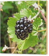 A Ripe Blackberry Wood Print
