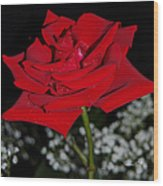 A Rose For Suzanne Wood Print
