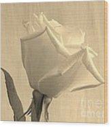 A Rose In Sepia Tone Wood Print