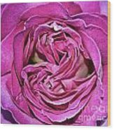 A Rose Is A Rose ... Wood Print