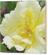 A Rose Is A Rose Rrp Wood Print
