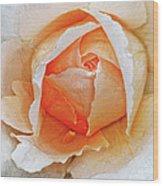 A Roses Tear Wood Print