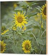 A Row Of Bright Yellow Sunflowers Grow Wood Print