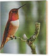 A Rufous Hummingbird Perched Wood Print