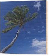 A Scenic View Of A Palm Tree Wood Print