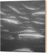 A School Of Silvery Salmon Wood Print