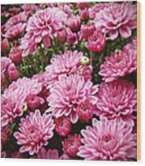A Sea Of Pink Chrysanthemums Wood Print