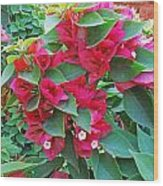 A Section Of Pink Bougainvillea Flowers Wood Print