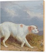 A Setter On The Moor Wood Print