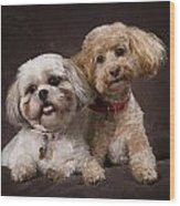 A Shihtzu And A Poodle On A Brown Wood Print