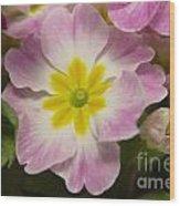 A Shy Flower  Wood Print